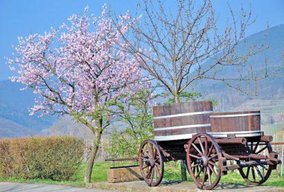 Landesgartenschau 2026 in Neustadt an der Weinstraße – ein Kick-Off für positive touristische Entwicklungen